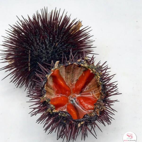 ricci di mare rosso albamare